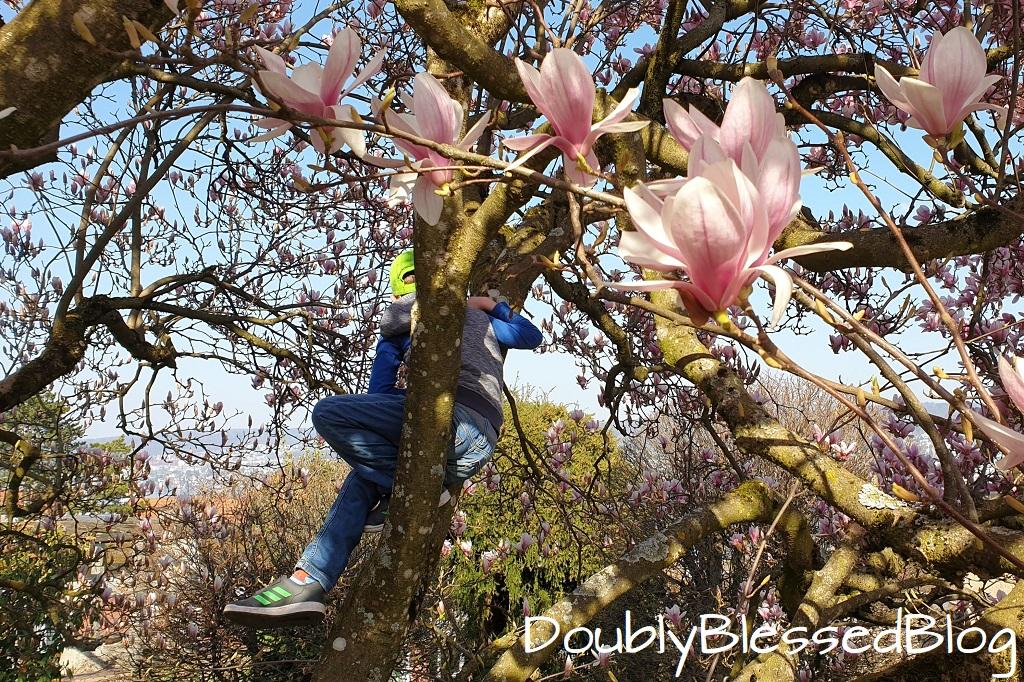Unsere liebsten Waldspiele - Auf Bäume klettern