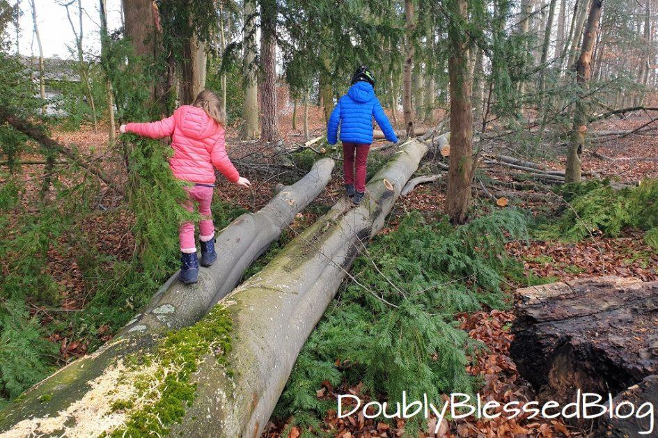 Unsere liebsten Waldspiele - Klettern